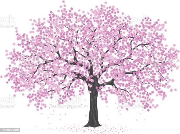 Pink cherry blossom tree sakura vector id825630588?b=1&k=6&m=825630588&s=612x612&h=xkcunzs1dhevrjd7pvm yv7e0tveqgxyz4szrxyeblw=