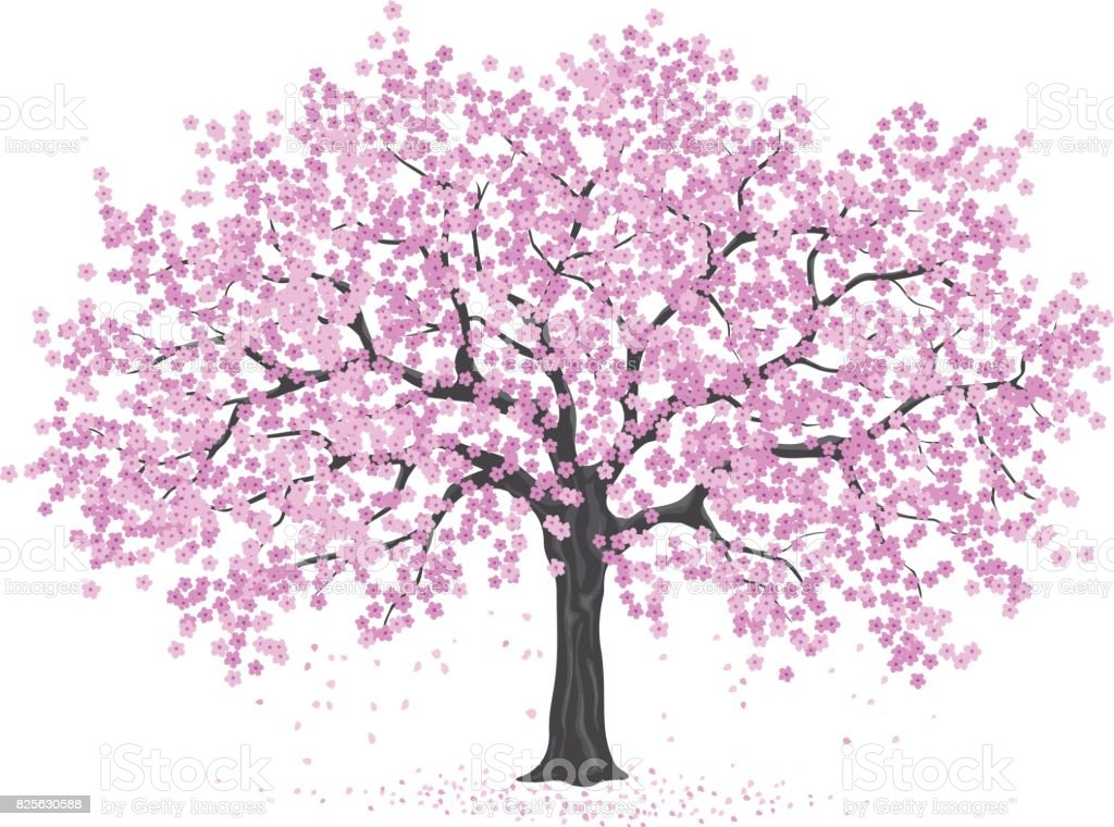royalty free japanese cherry blossom clip art vector images rh istockphoto com cherry blossom clipart free Cherry Blossom Tree Clip Art