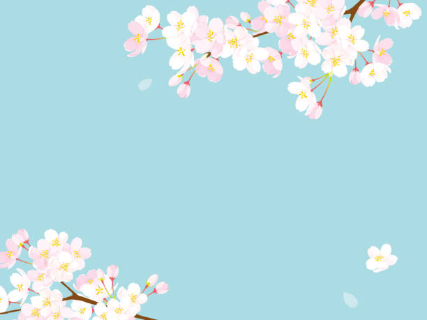 Pink Cherry blossom,Vector Illustration Pink Cherry blossom,Vector Illustration springtime stock illustrations