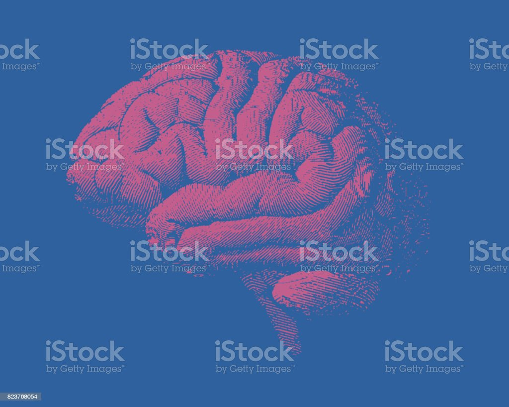 Pink engraving brain side view illustration with on blue bg stock human brain symbol text the human body thailand biocorpaavc Images