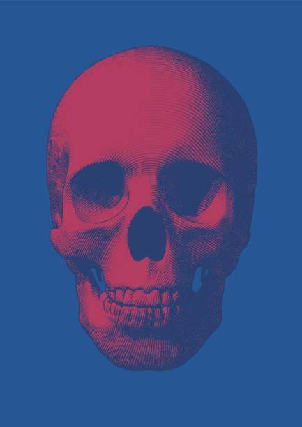 Pink engraving skull front view on blue BG vector art illustration