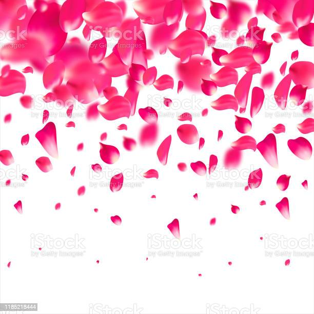 Pink falling petals falling rose flower pastel background vector id1185218444?b=1&k=6&m=1185218444&s=612x612&h= o qhy712ssv0poq dakqcmlk hm6ju9uwms 4de1pk=