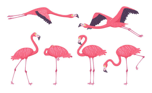 Pink Flamingo Collection Pink Flamingo collection in different poses. Isolated elements on white background. Vector illustration. flamingo stock illustrations