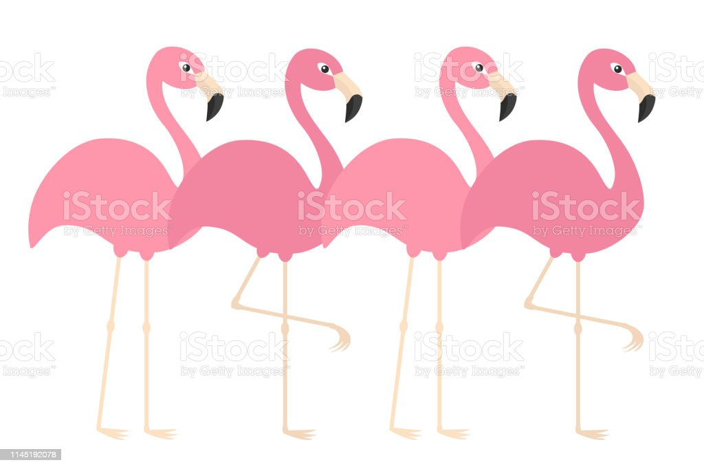 Flamant Rose Ensemble Ligne Oiseau Tropical Exotique