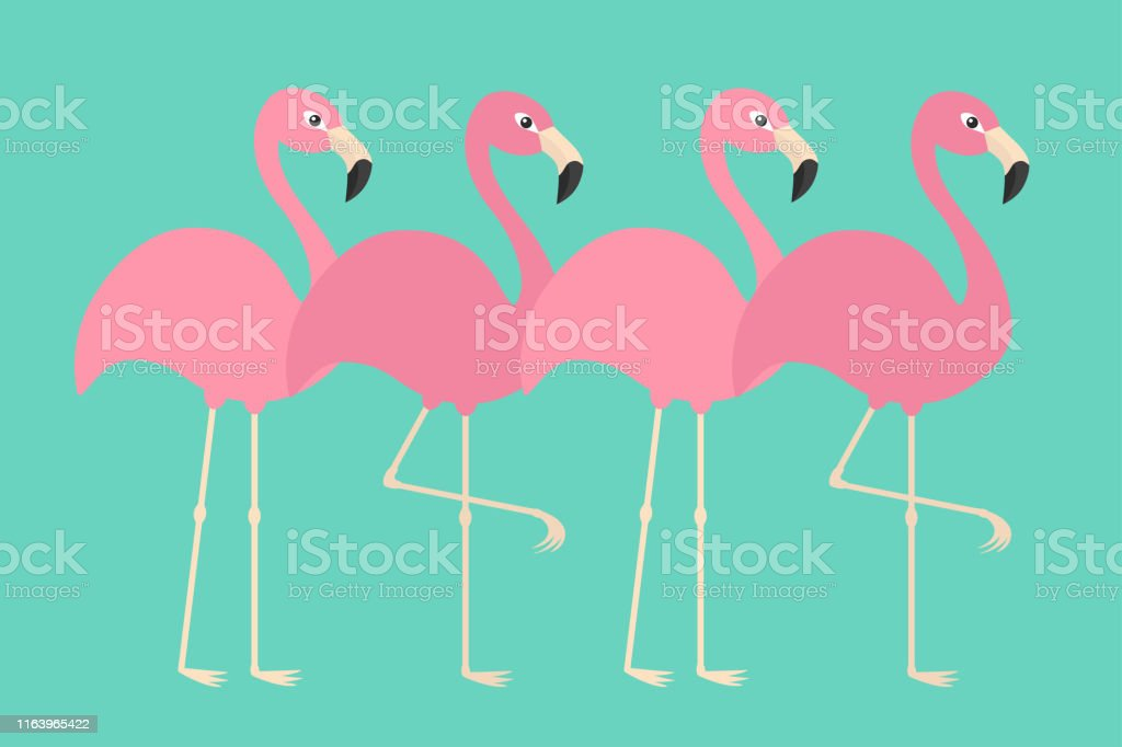 Pink flamingo set line. Exotic tropical bird. Zoo animal collection....