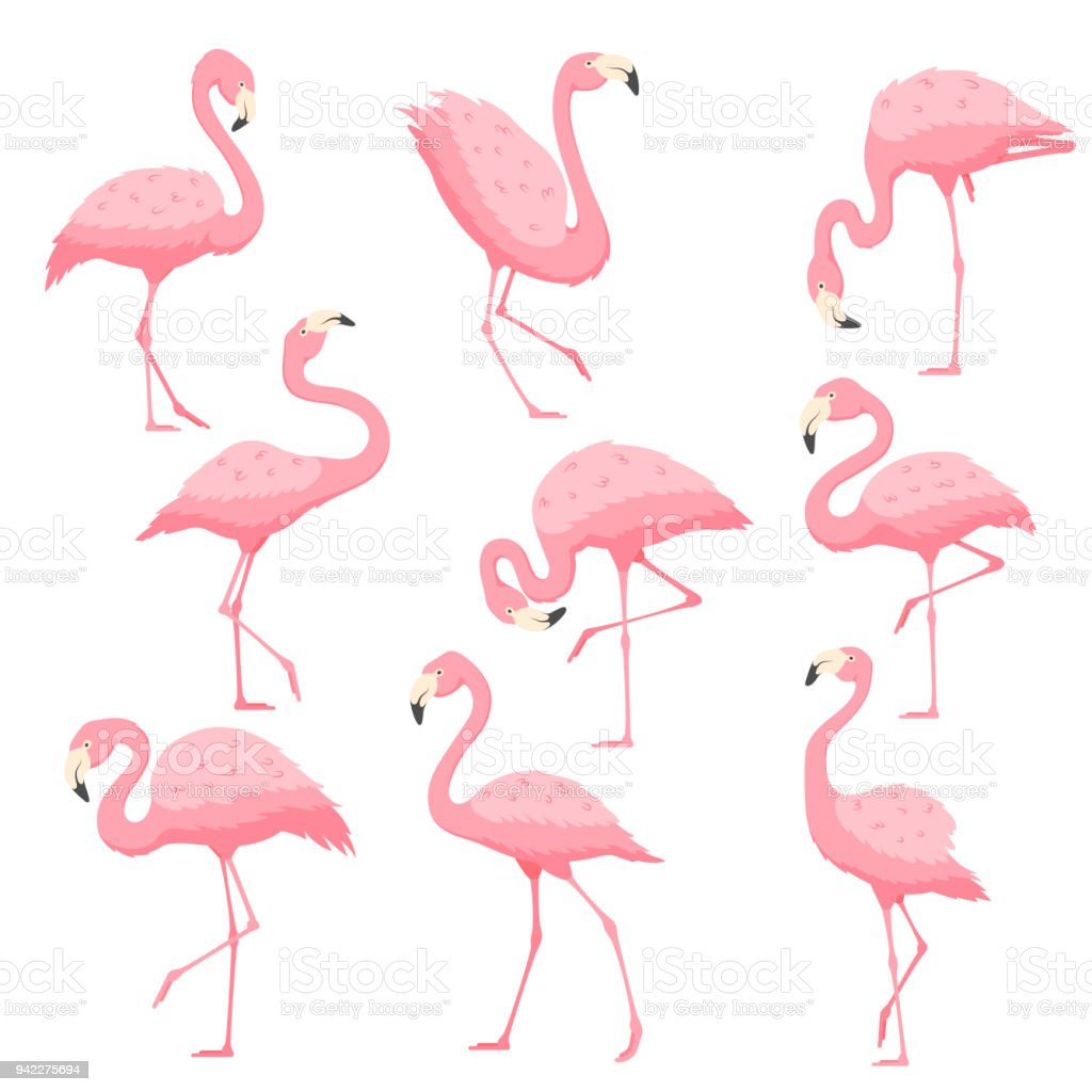 Pink flamingo vector cartoon illustration vector art illustration