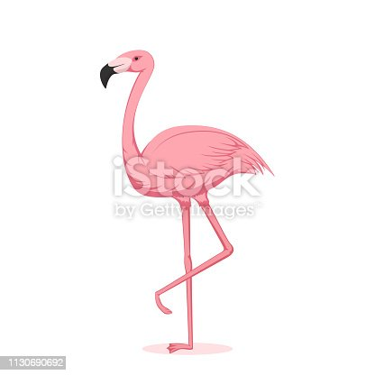 Cartoon pink flamingo isolated on white background, illustration.