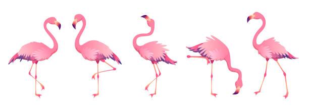 Pink flamingos. Cute flamingo animal exotic nature wild fauna zoo bird beak plumage legs tropical african beach art Pink flamingos. Cute flamingo animal exotic nature wild fauna zoo bird beak plumage legs tropical african beach art, cartoon vector flamingo stock illustrations