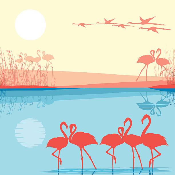 ピンクのフラミンゴ野生の - 野生動物旅行点のイラスト素材/クリップアート素材/マンガ素材/アイコン素材