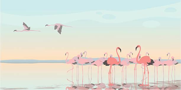 stockillustraties, clipart, cartoons en iconen met pink flamingos - wildplassen