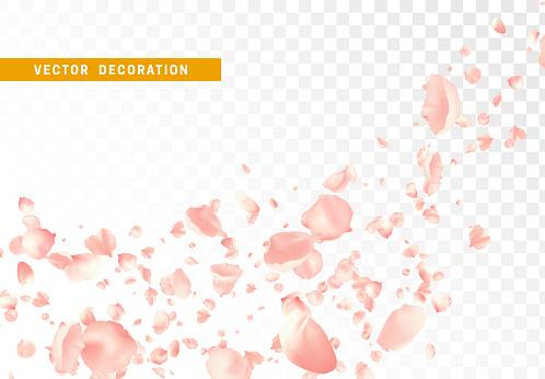 Pétalos de flores rosas están volando en círculos aislados sobre fondo transparente.