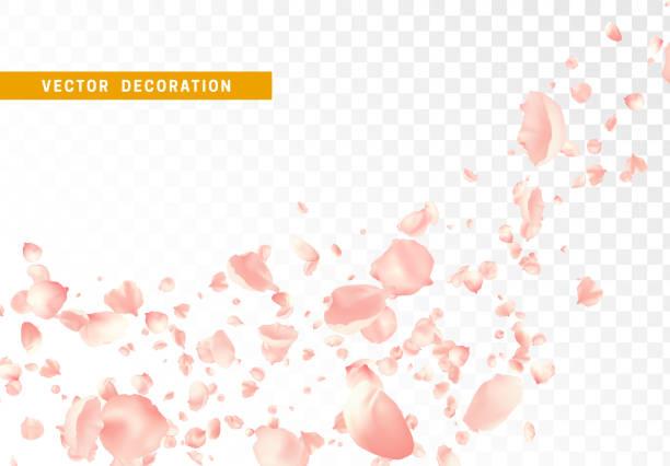 분홍색 꽃 꽃잎은 투명 한 배경에 고립 된 돌고 날고 있다. - 꽃잎 stock illustrations
