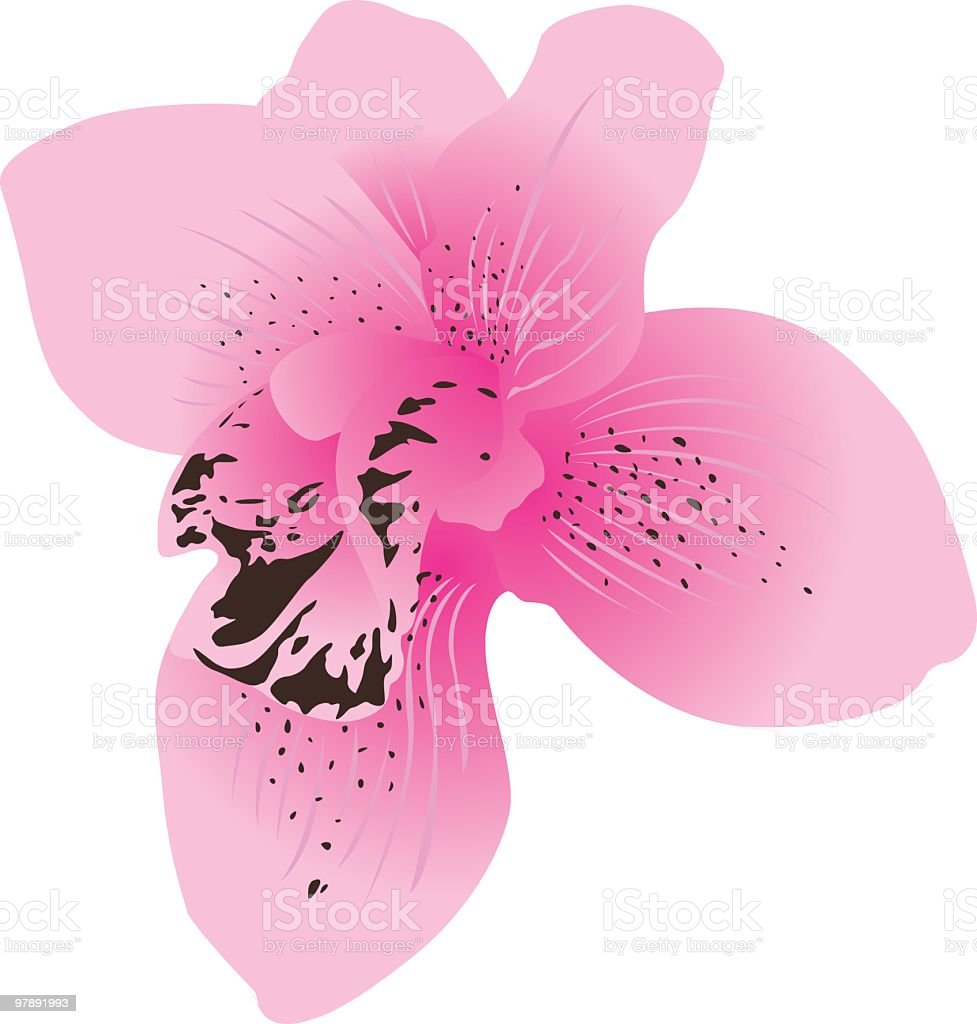 Pink Flower royalty-free pink flower stock vector art & more images of beauty in nature
