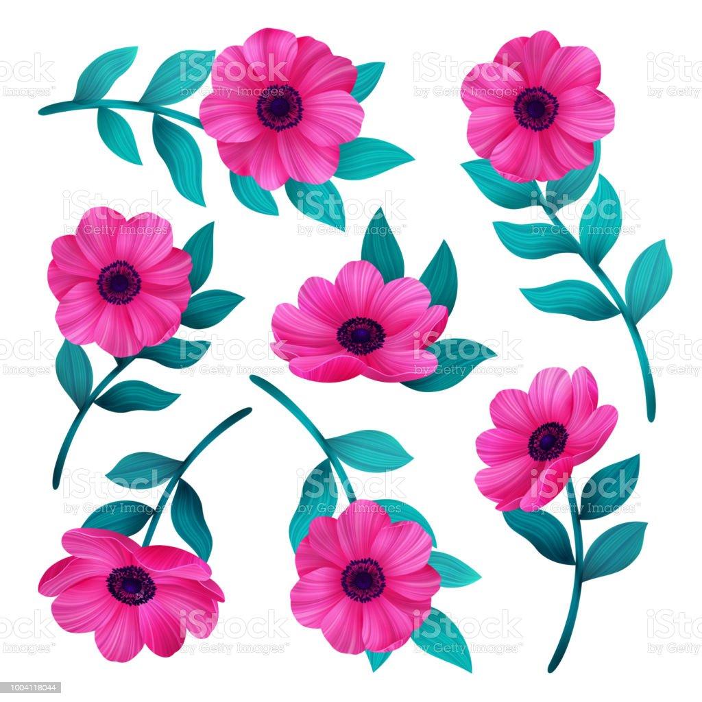 Ilustración De Flores Rosas Aisladas Sobre Fondo Blanco Conjunto De