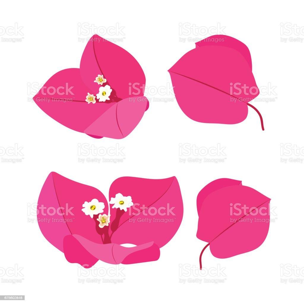 Pembe çiçekler seti vektör sanat illüstrasyonu