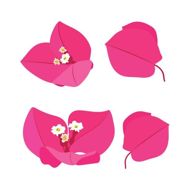 Set de flores de color rosa - ilustración de arte vectorial