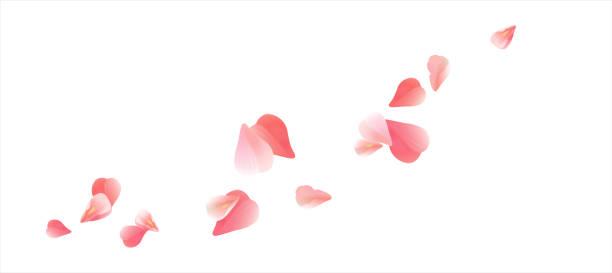 분홍색 꽃잎 흰색 배경에 고립 된 비행 이다입니다. 심 혼의 형태로 꽃잎입니다. 벡터 - 꽃잎 stock illustrations