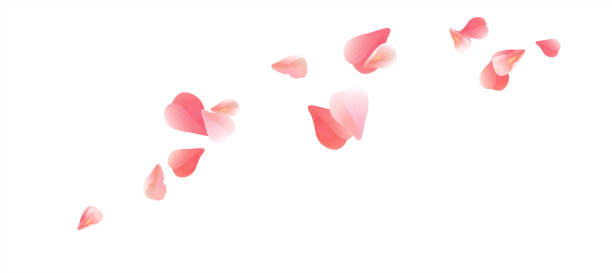 ilustrações de stock, clip art, desenhos animados e ícones de pink flying petals isolated on white background. petals in the form of heart. vector - pétala