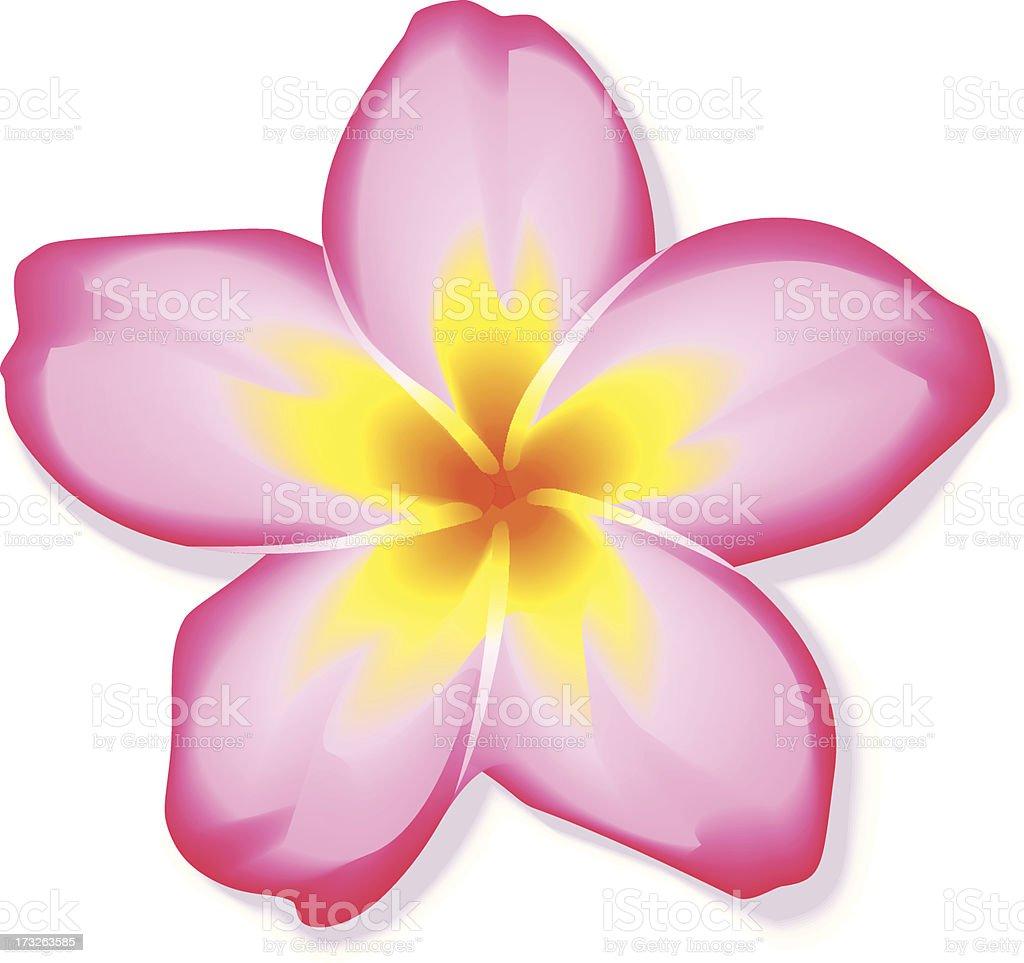 Pink frangipani plumeria flower stock vector art more images of pink frangipani plumeria flower royalty free pink frangipani plumeria flower stock vector art amp mightylinksfo Choice Image