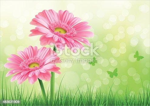 istock Pink Gerbera Background 483631909
