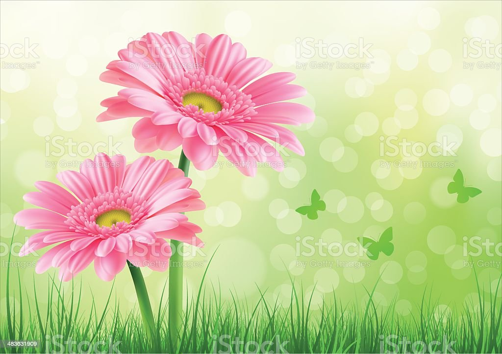 Pink Gerbera Background vector art illustration