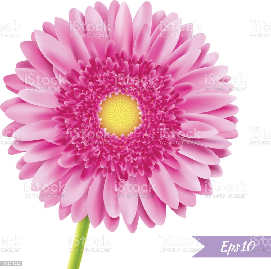 Pembe Gerbera Tek çiçek Stok Vektör Sanatı Aydınlıknin Daha Fazla