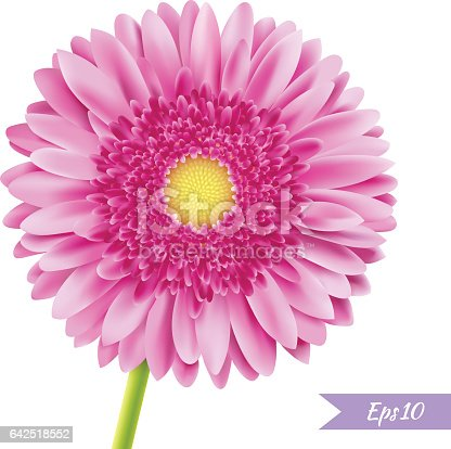 einzelne blume rosa gerbera stock vektor art und mehr bilder von baumbl te 642518552 istock. Black Bedroom Furniture Sets. Home Design Ideas