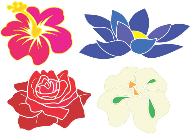 Pink Hibiscus, blue Lotus, Red rose and White orchid illustration vector art illustration
