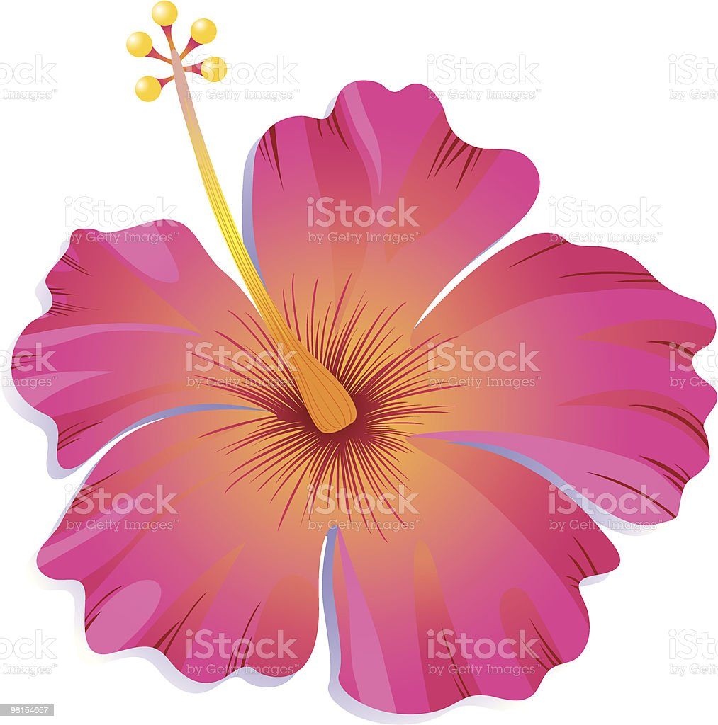 Pink Hibiscus royalty-free stock vector art