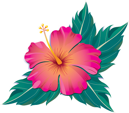 Pink Hibiscus with Leaves