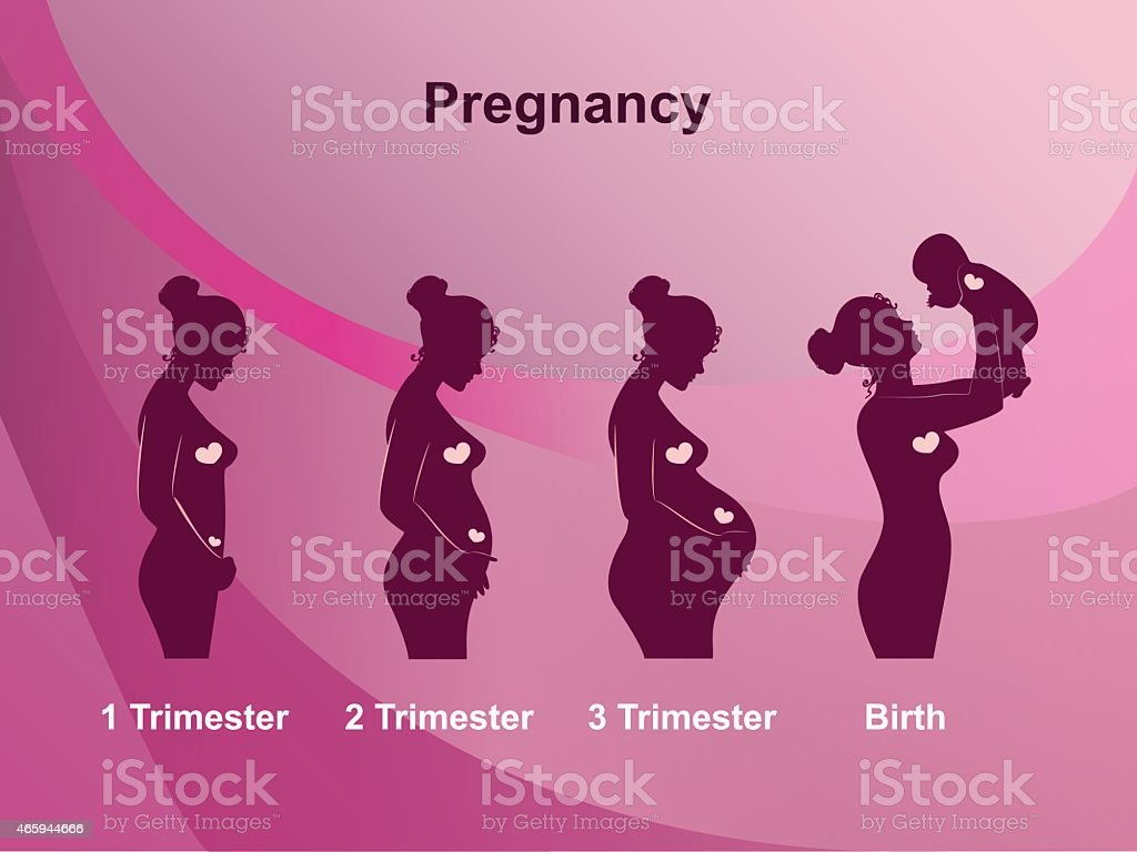 A pink infographic showing four stages of pregnancy vector art illustration