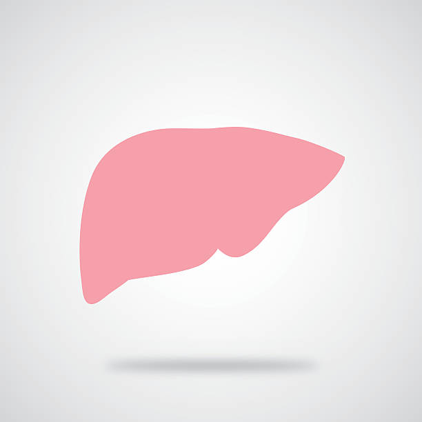Pink Liver Icon vector art illustration
