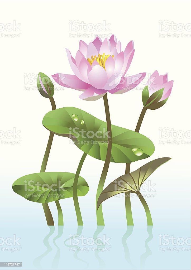 pink lotus flower royalty-free pink lotus flower stock vector art & more images of botany