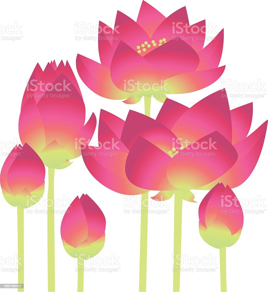 pink lotus lilies decorative floral element. vector illustration vector art illustration