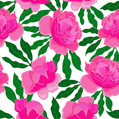 Pink peonies on white background. Seamless floral pattern, vector.