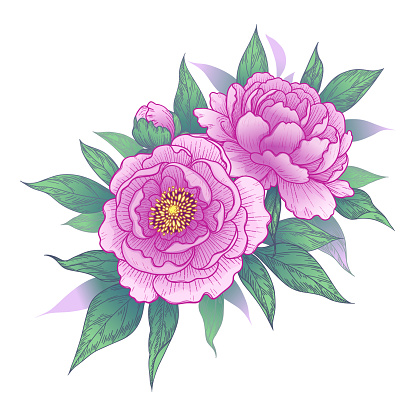 Pink peony flowers and leaves bunch