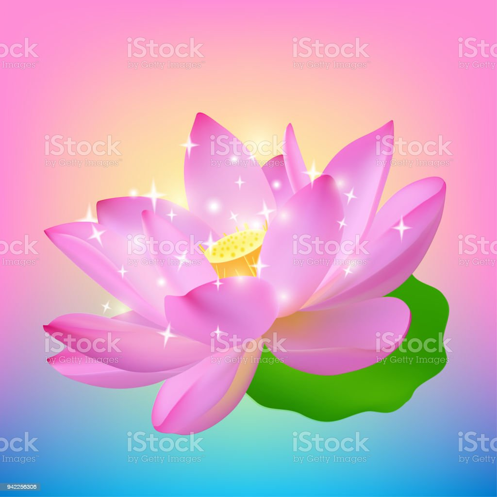 Pink Realistic Lotus Flower At Sunset The Opened Lotus Flower Of The