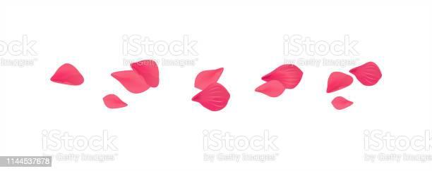 Pink red flying petals isolated on white background sakura roses vector id1144537678?b=1&k=6&m=1144537678&s=612x612&h= 7pyyi1pbqh8v0ktbhadcdkscz6dizhcwcry7yuntlq=