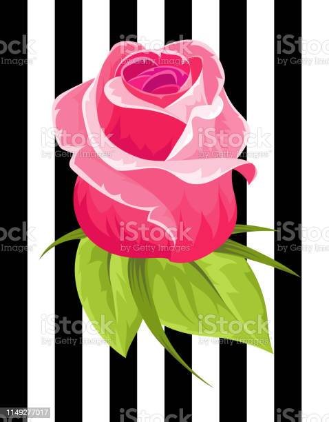 Pink rose bud vintage flower wedding flower textile and clothes print vector id1149277017?b=1&k=6&m=1149277017&s=612x612&h=v6oxwi i kx tqvu1zarbaecyidll5uf wlwurok5mq=
