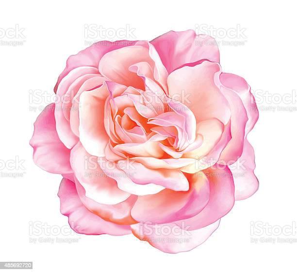 Pink rose flower vector vector id485692720?b=1&k=6&m=485692720&s=612x612&h=yibeer8 bp96fbj4f8sz5a j vel4tqmugf j4a zwe=