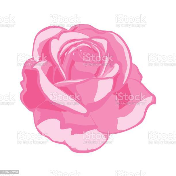 Pink rose on white background vector id819787284?b=1&k=6&m=819787284&s=612x612&h=jq5vzram 4cg8ebrvvf56dvt1puljpo 0fiwlmqaf0i=