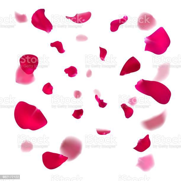 Pink rose petals are falling down vector id932172122?b=1&k=6&m=932172122&s=612x612&h=bsdnf2493t2wgnuvp7mqrvcwylquzmn3aarzzi5csey=