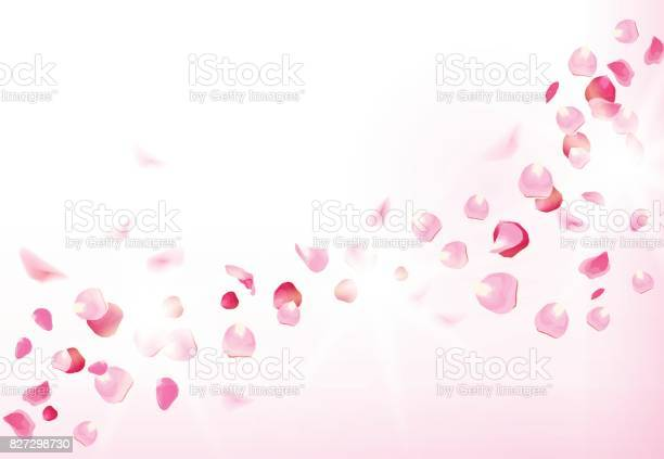 Pink rose petals is flying in the air with flares vector id827298730?b=1&k=6&m=827298730&s=612x612&h=hczxwf2idir4eu5lsfdgsmxhwpmnfz6 9utyfsy3n4a=