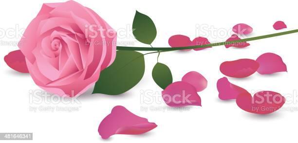 Pink rose vector id481646341?b=1&k=6&m=481646341&s=612x612&h=uw64nmntlkyctghkeoqmqpsgyn9nc gmfo6jnopqecw=