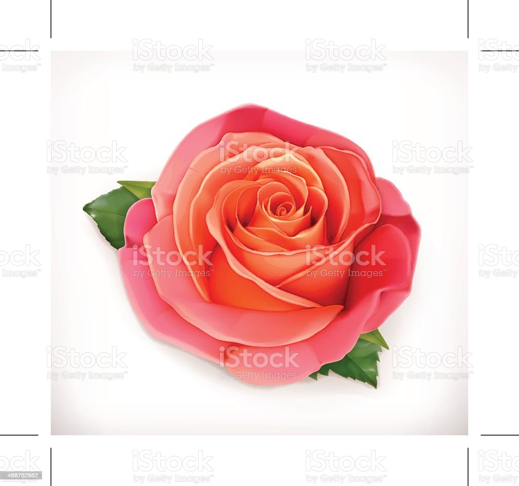 rose rose vector illustration - Illustration vectorielle