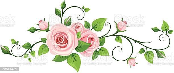 Pink rose vine vector illustration vector id535414752?b=1&k=6&m=535414752&s=612x612&h=wvkqn2 t0ugzkjvxojigdqiomt0e2iups4pic0ysuds=