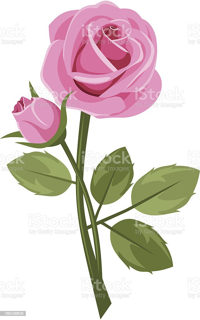 Pink rose with stem isolated on white. Vector illustration. vector art illustration