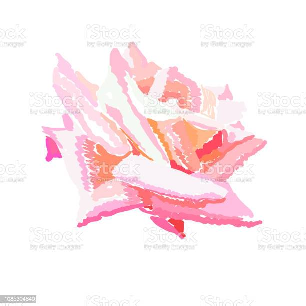 Pink rosebud watercolor design element. Hand drawn full-blown flower. Pink rose on white background. Garden flower. Greeting card, postcard, cover, poster floral template. Isolated color vector