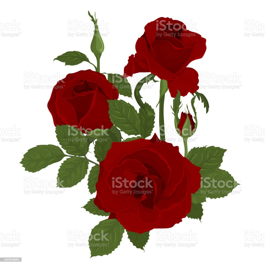 Pink roses bouquet with leaves vector art illustration