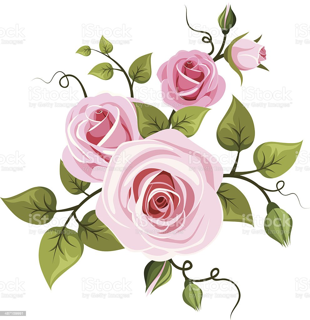 Pink roses. Vector illustration. vector art illustration